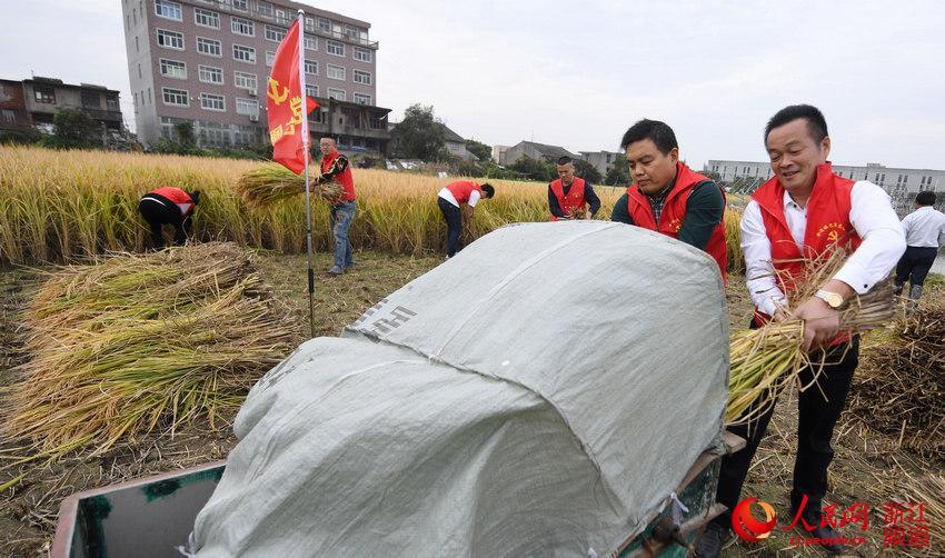 台州路桥:党员扶困助农忙秋收【3】