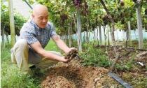 松阳:全县域标准化生产绿色食品 40万亩农田产放心农产品