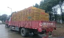 杭州有流动贩鸡城郊仍能买到活禽 秋冬H7N9高发千万小心!