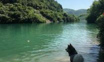 热成狗?狗才不热,王思聪的狗可是在莫干山避暑呢……