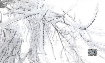 美翻了! 莫干山迎来2018年第一场雪