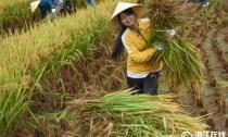 杭州淳安:农田减肥减药 保护千岛湖水源