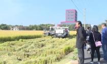 县农业局召开秸秆综合利用(禁烧)工作推进暨水稻新品种展示现场会