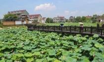 生态绿币助水清岸绿