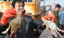 宁波红膏梭子蟹量减少价上涨 经销商囤货基本要靠抢