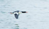 这种罕见鸟类全球仅1000余只 如今它再次来到绍兴