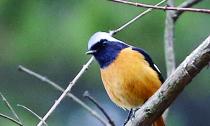 这美丽的小鸟你可认识