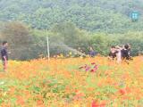 上杨村:美丽风景催生美丽经济