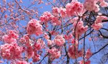 这个春天,我和花草一起走过
