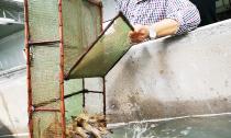 下渚湖街道罗氏沼虾良种扩繁基地投产  预计年扩繁虾苗可达10亿尾