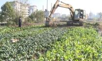 """武康街道集中整治""""毁绿种菜""""  还居民优美居住环境"""