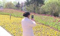 新市大运河公园新增郁金香花海景观