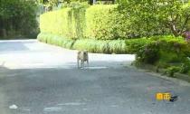 五龙小区散养犬只现象严重