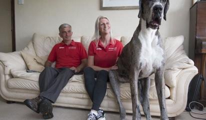 英国汪星人身高2.1米成世界第一高狗