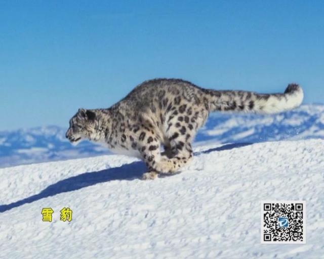 国际珍惜动物保护日:保护动物