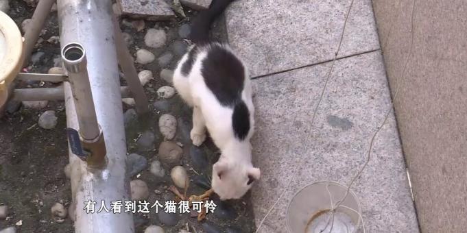 余英坊一荒废喷泉池里住着多只流浪猫