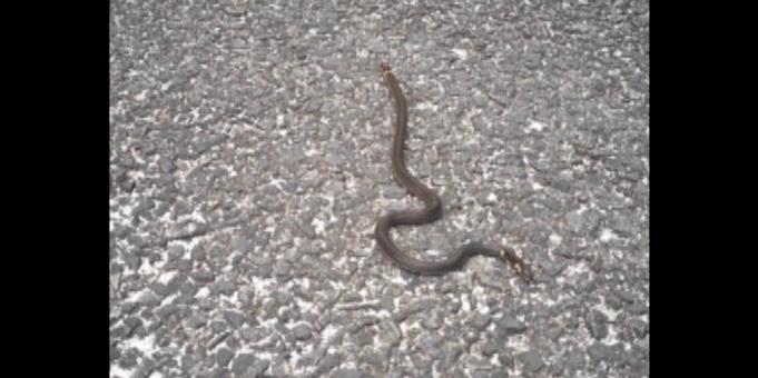 《拍客看德清》公园发现有蛇出没?市民散步需小心