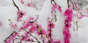 北京河北内蒙等地现五月飞雪